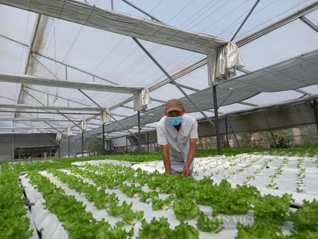Sang tận Malaysia học bí quyết trồng rau, 8X Đà Nẵng thu lãi hơn 20 triệu đồng/tháng