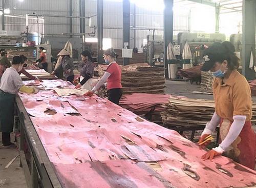 Phú Thọ: Chế biến lâm sản thu nhập 700 triệu đồng/năm