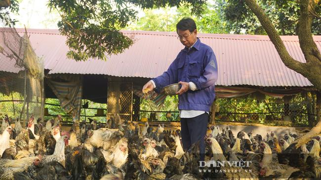 Hà Nội: Nuôi gà đặc sản thả đồi, chân không chì, thịt, xương đen sì, chỉ việc nuôi không lo bán