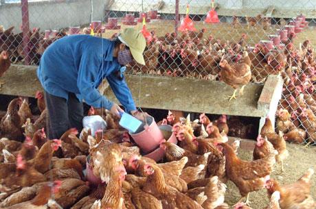 Tìm lời giải cho những khó khăn 'lặp đi lặp lại của người nông dân