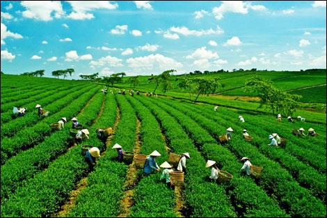 Nông sản Việt Nam: Nhiều nhưng thiếu thương hiệu