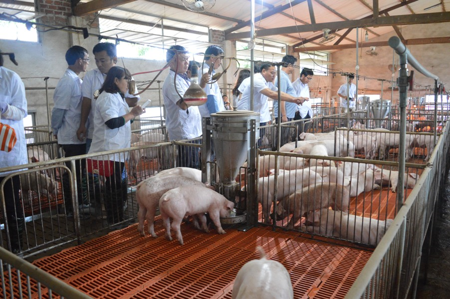 Tây Nguyên: Phát huy lợi thế để phát triển chăn nuôi