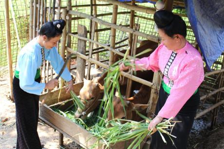 Sơn La: Nông dân thu nhập cao nhờ Hội