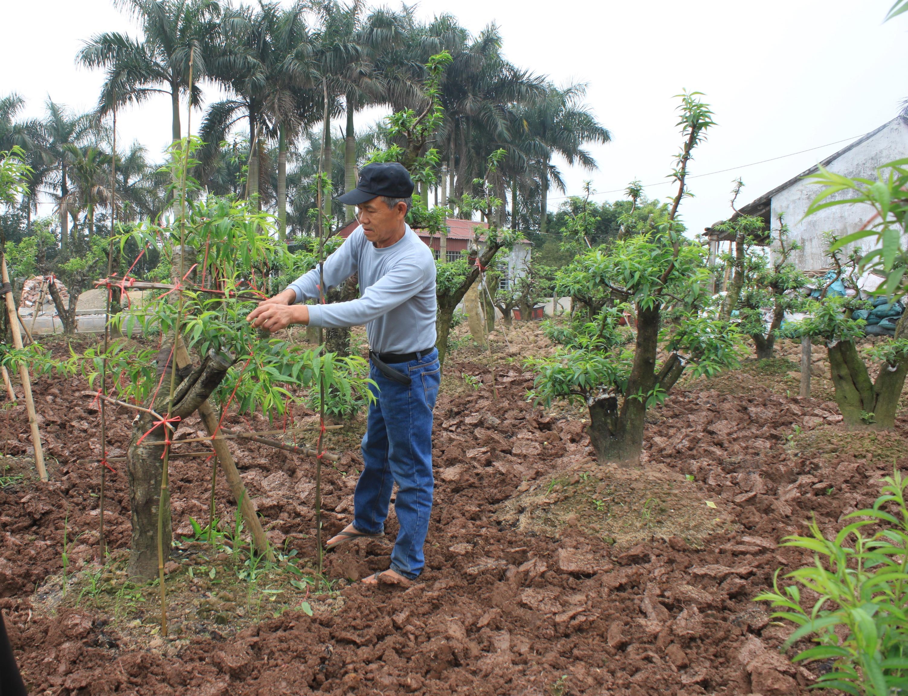 Vốn tín dụng thúc đẩy quá trình xây dựng nông thôn mới