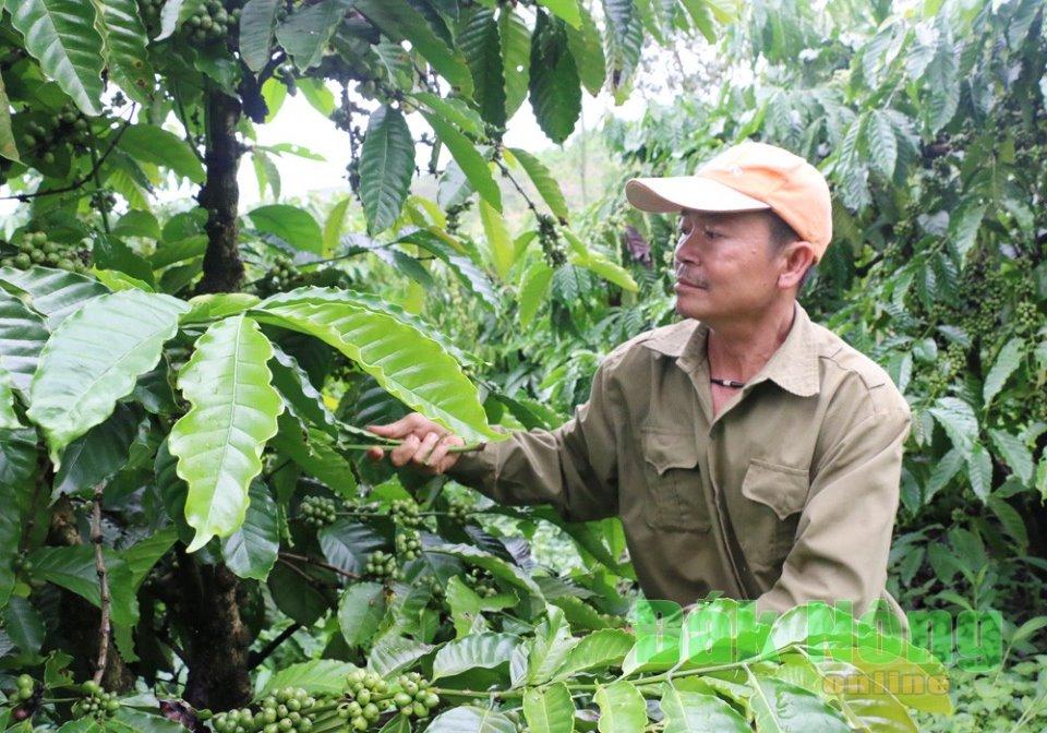 Lâm Đồng: Lãi to nhờ vốn Quỹ