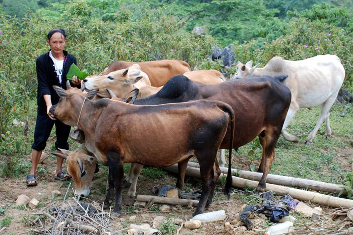 Quỹ HTND: Hỗ trợ, khuyến khích các hộ nông dân vay vốn đầu tư sản xuất