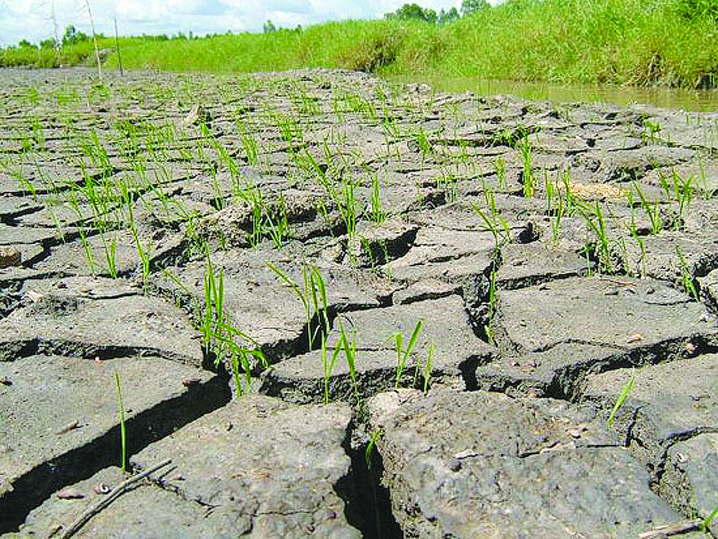 Ảnh hưởng của biến đổi khí hậu tới nông thôn mới