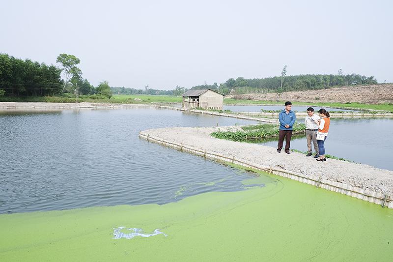Quảng Trị: Đẩy mạnh phong trào nông dân sản xuất kinh doanh giỏi