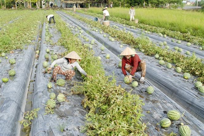 Nông nghiệp ứng phó biến đổi khí hậu