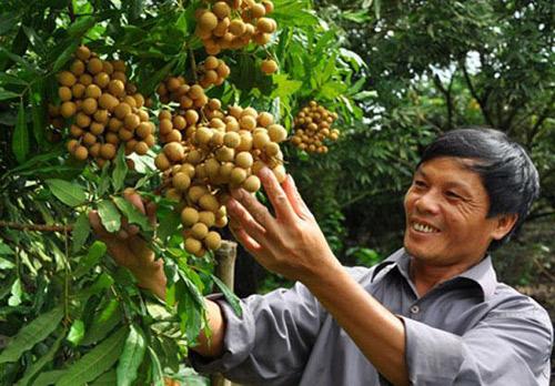 Các nguồn vốn giúp nông dân mạnh dạn làm giàu