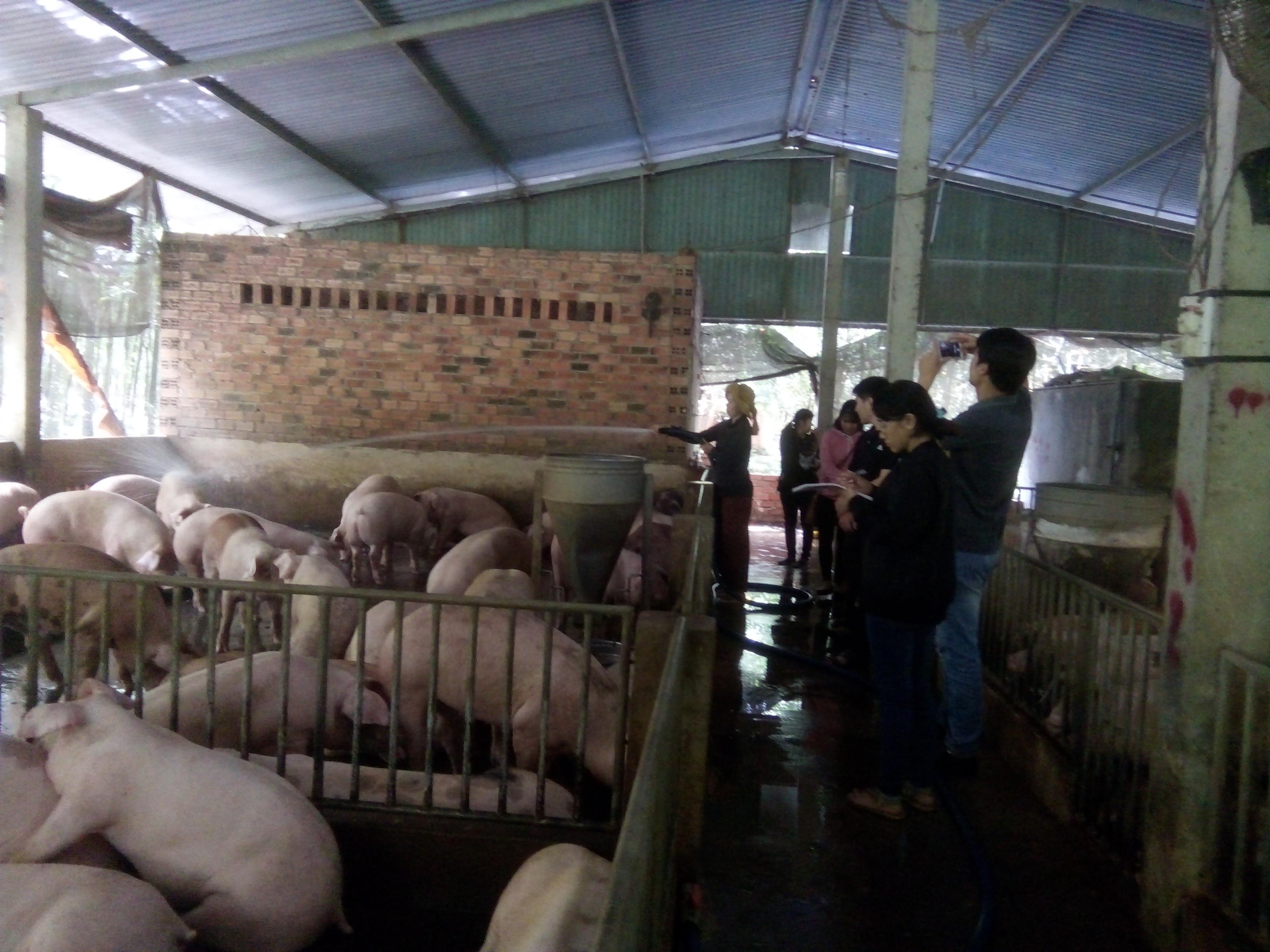 Hà Nội: Nâng cao chất lượng phong trào Nông dân sản xuất kinh doanh giỏi thông qua các hoạt động dịch vụ, hỗ trợ nông dân