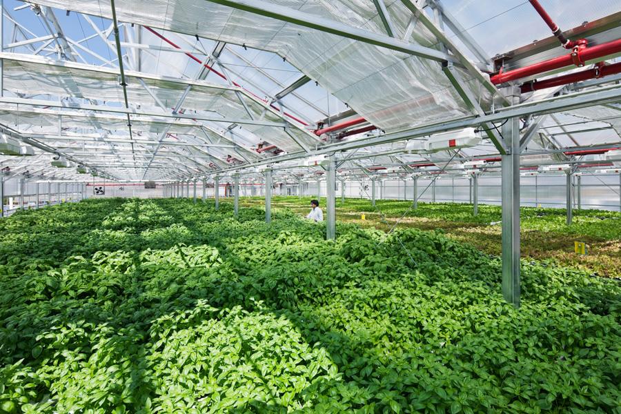 Nông nghiệp Việt Nam cần những bài học từ Israel