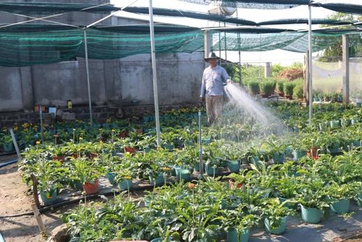 Phát huy hiệu quả nguồn vốn Quỹ Hỗ trợ nông dân