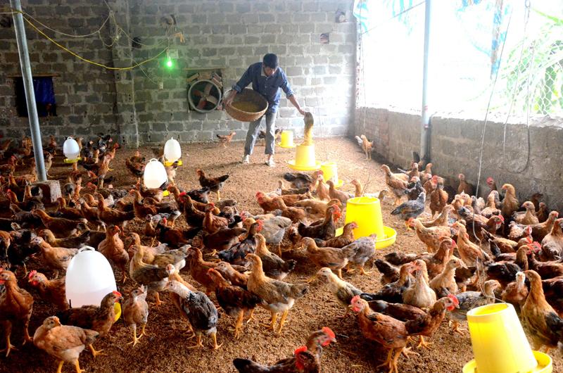 Hội ND huyện Đầm Hà (Quảng Ninh): Kết nối nông dân làm giàu
