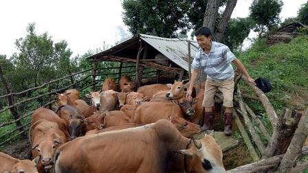 Thuận Châu (Sơn La): Khơi thông nguồn vốn ưu đãi hỗ trợ cho hội viên, nông dân