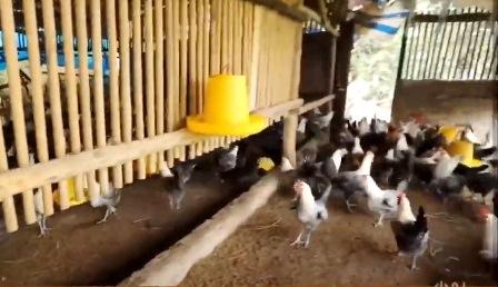 Quỹ HTND Quảng Nam trợ lực cho hơn 1.400 hộ hội viên, nông dân vay vốn