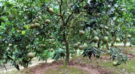 Quỹ HTND Hòa Bình: Hỗ trợ hơn 6.500 lượt hộ hội viên, nông dân vay vốn phát triển sản xuất