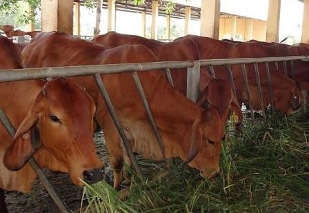 Quỹ HTND Bình Định: Hơn 2 nghìn hội viên, nông dân được hỗ trợ phát triển sản xuất
