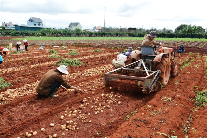A project for gaining recognition for Dalat potatoes