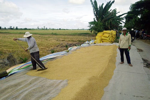 No more worry about rice price squeeze  thanks to Rach Lop Cooperatives new way of doing