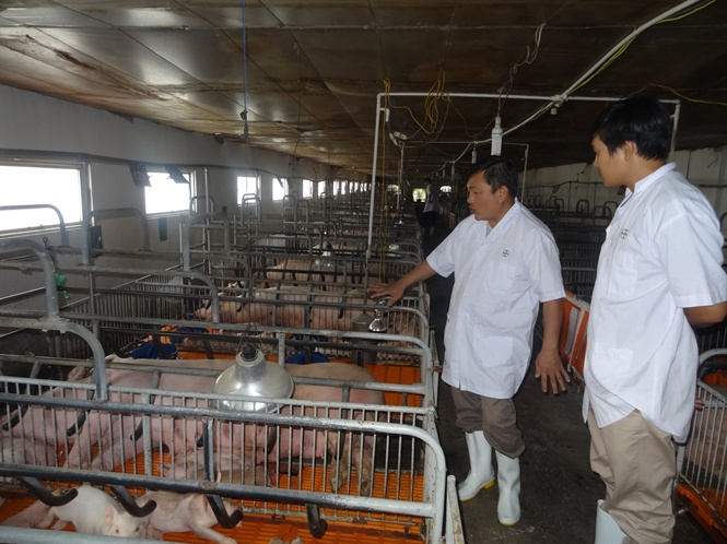 Closed loop farm from breeds, feed to processing