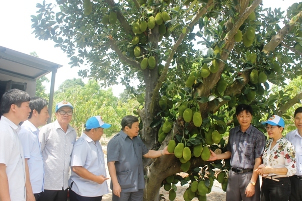 VNFU Chairman visits a mango farmer with annual income of nearly 1 billion dong
