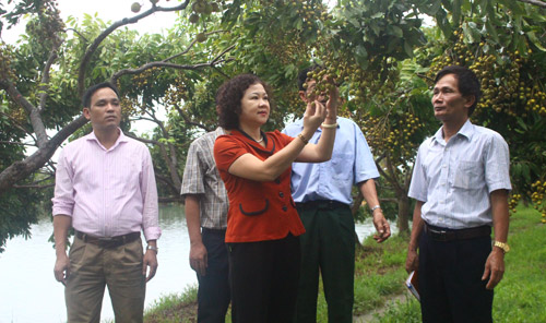 Supporting farmers in Hanoi captital to develop Hi-tech agriculture