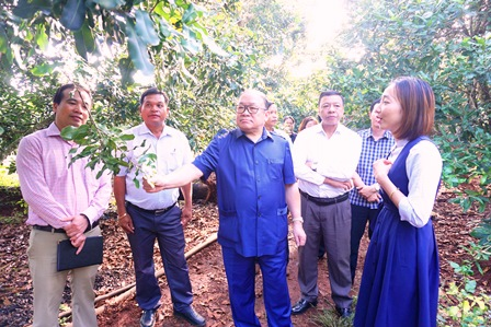 How a model of association in growing macadamia in Dak Lak province impresses the Chairman of Vietnam Farmers Union