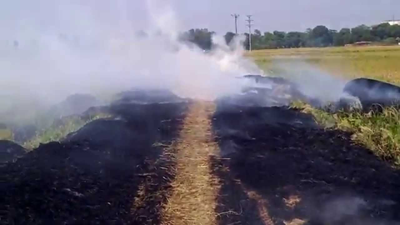 Phần lớn rơm rạ bị đốt bỏ ngay trên cánh đồng gây lãng phí và ô nhiễm môi trường (Ảnh minh họa, nguồn Internet)