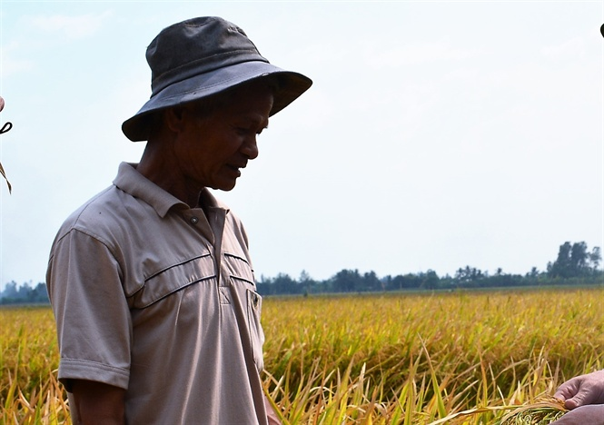 Hiệu quả sản xuất lúa hữu cơ