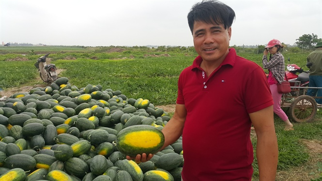 Nông dân Ninh Bình trúng mùa dưa hấu