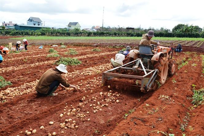 Xây dựng đề án nhận diện khoai tây Đà Lạt