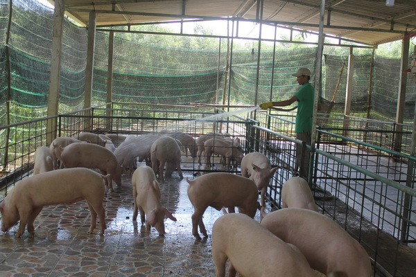 Nông nghiệp Quảng Ngãi trên con đường phát triển nông nghiệp sạch