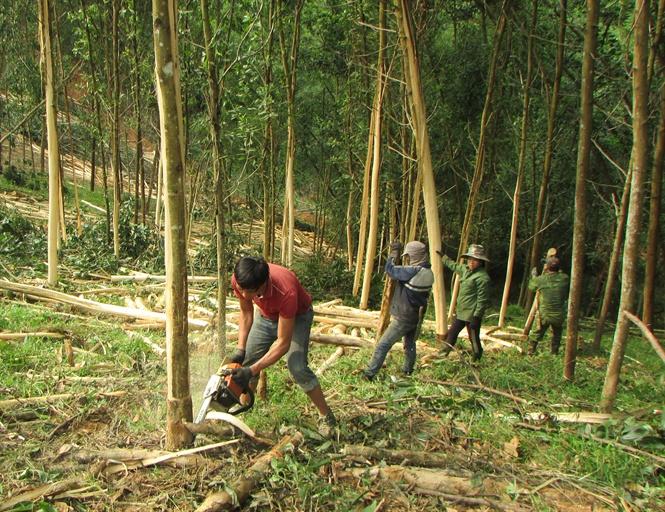Nghệ An: Gian nan quản lý tài nguyên rừng