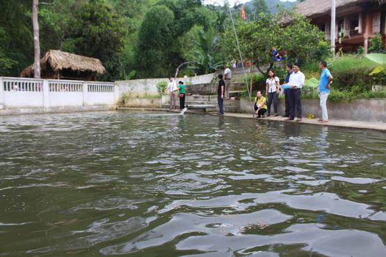 Lục Yên (Yên Bái): Tập trung phát triển nuôi trồng thủy sản bền vững