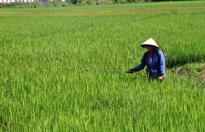 Tăng cường công tác quản lý, sử dụng thuốc diệt cỏ