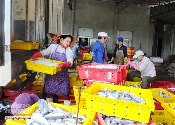 Xuất khẩu thủy sản sang Trung Quốc: Nâng chất lượng, chuyển từ tiểu ngạch sang chính ngạch