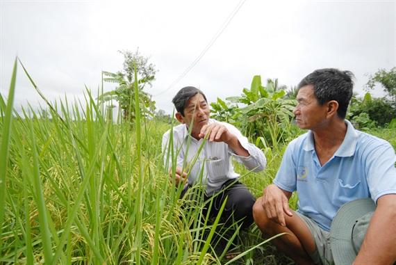 Nạn giống giả bào mòn danh tiếng gạo Việt