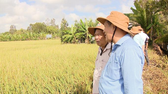 Dùng thảo mộc phun cho lúa giảm 220.000 đồng/công