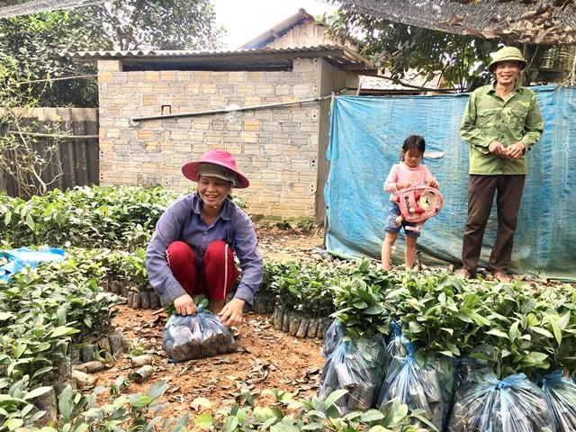 Chị Huân đang gom cây giống chuẩn bị giao cho khách.