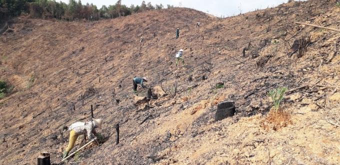Tuyên Quang: Đã sẵn sàng trồng 10.000 ha rừng