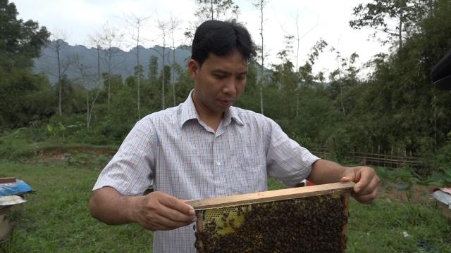 Anh Ngô Văn Thắng đang kiểm tra đàn ong.