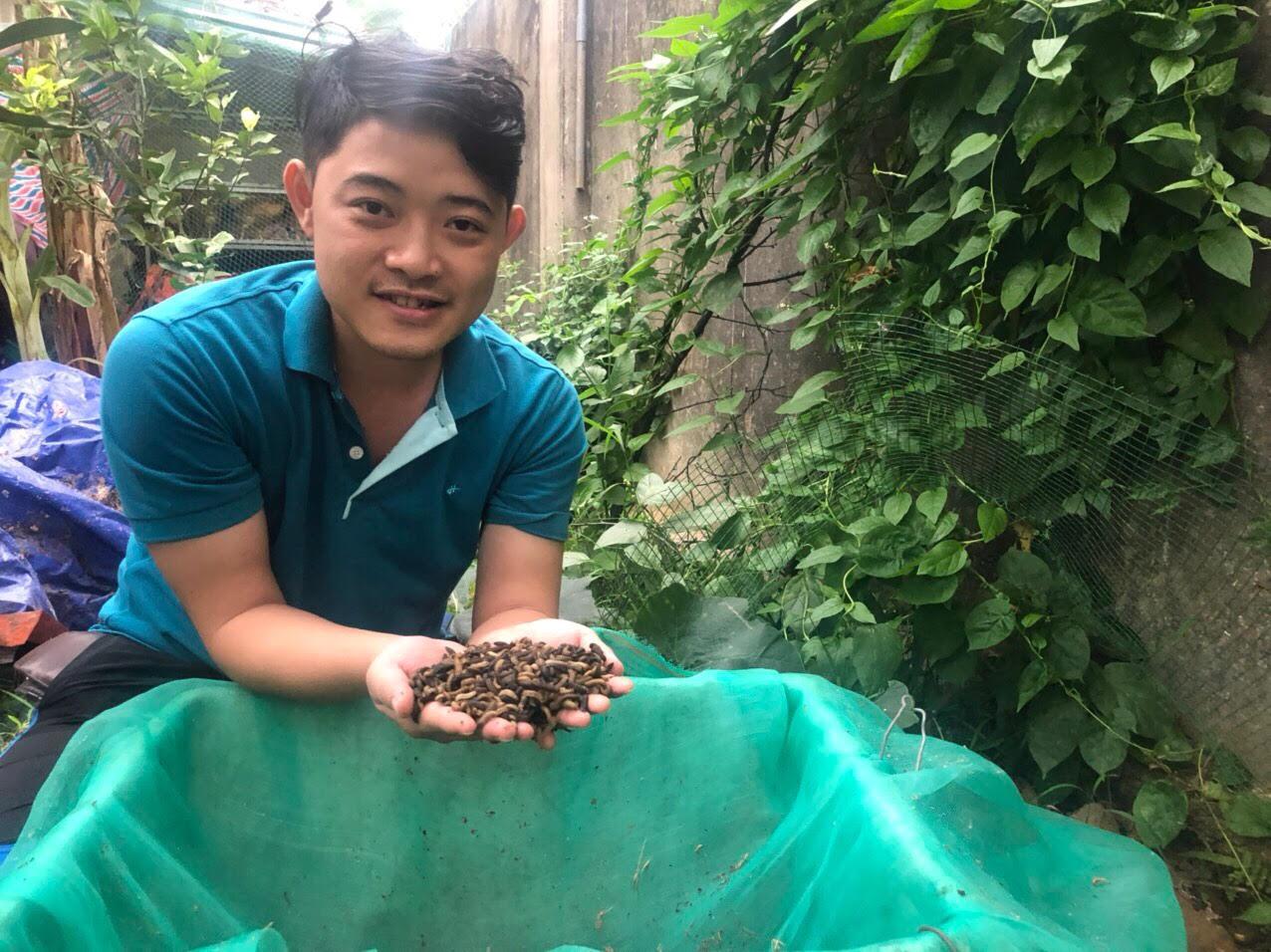 Anh Sơn đang thu hoạch ấu trùng để bán