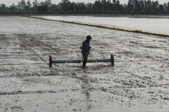 Thâm canh lúa bền vững bằng kỹ thuật 3 giảm, 3 tăng, 1 phải, 5 giảm