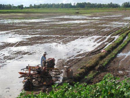 Bón lân nung chảy Lâm Thao cho lúa trên đất phèn