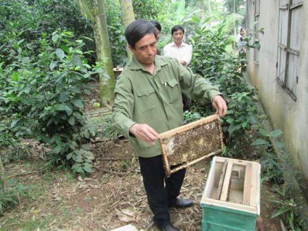 Tổ hợp tác nuôi ong giúp nhau làm giàu