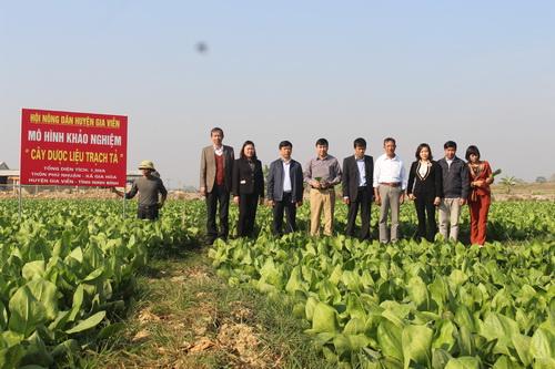 Ninh Bình: Cây trạch tả cho giá trị kinh tế cao