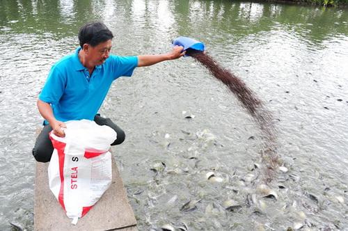 Nuôi cá kết hợp trồng cây ăn trái lãi 500 triệu đồng/năm