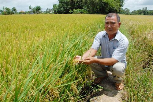 Ngưỡng mộ người sản xuất lúa giống thu hơn nửa tỷ đồng/năm