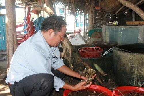Khánh Hòa: Nuôi hàu sữa thu lợi nhuận 50- 70 triệu đồng/vụ